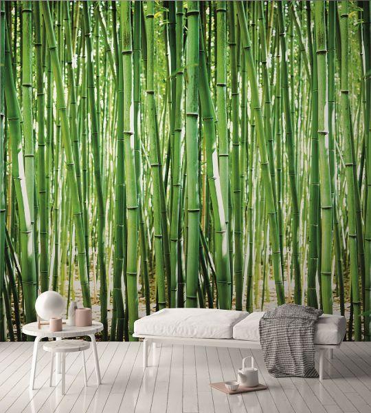 Vlies Fototapete Bambus Wald Natur Bamboo grün Digital Druck 1,59mx2,80m
