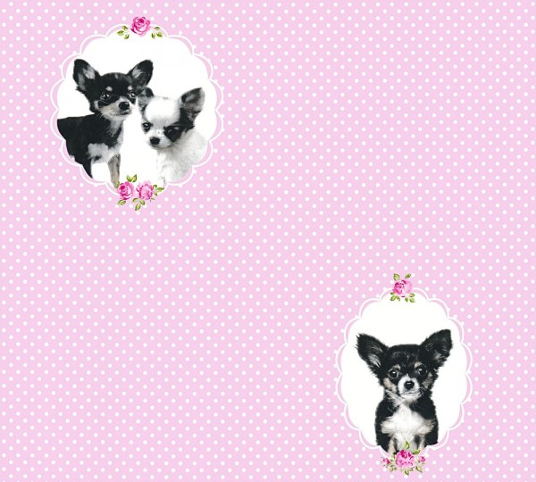 Vliestapete Kinder Chihuahua Hunde Punkte rosa weiß