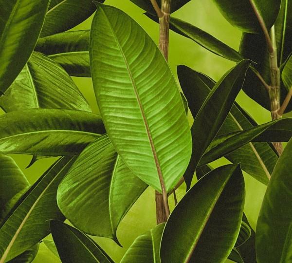Vliestapete Dschungel Tropen Blätter A.S Création Neue Bude 2.0 Carlos