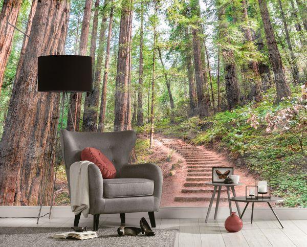 Fototapete Digitaldruck Treppe zum Wald 255 x 350 cm