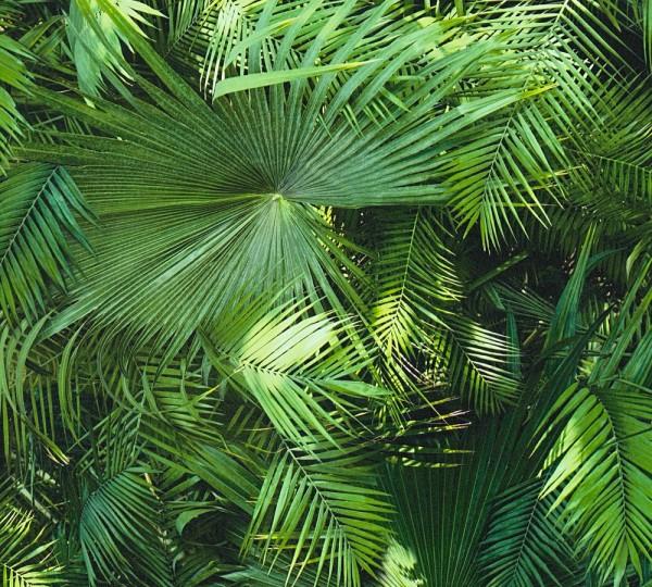 Vliestapete Dschungel Palmen Blätter A.S Création Neue Bude 2.0 Carlos