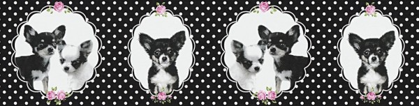 Tapeten Bordüre Chihuahua Hunde schwarz Punkte